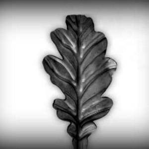 Artikel-Nr. 04-103 Zierblatt 95×48 mm